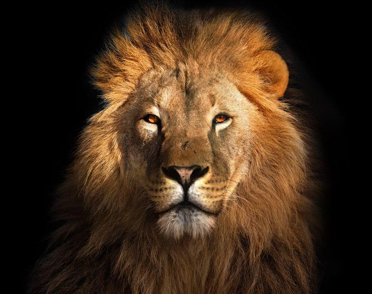 Marketing Digital | O Rei que veio para ficar