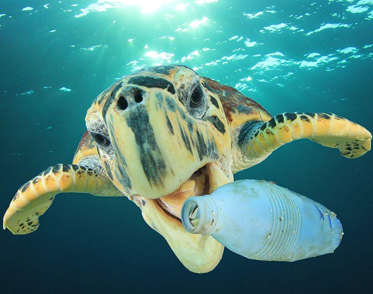 Responsabilidade Ambiental - A gota mais preciosa do oceano